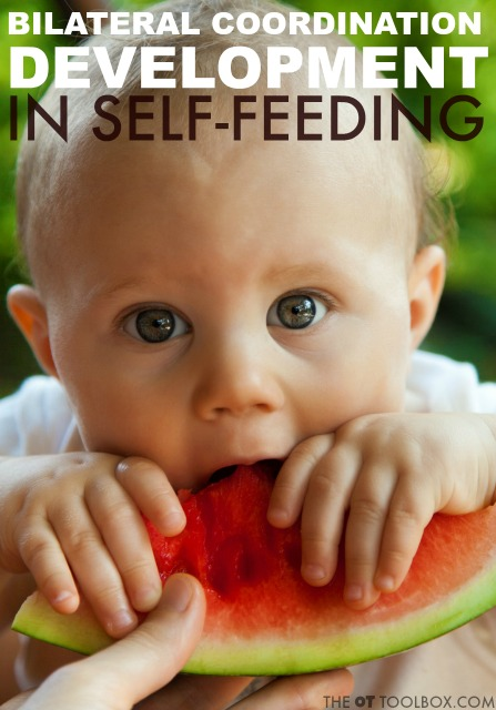 Bilateral coordination in feeding