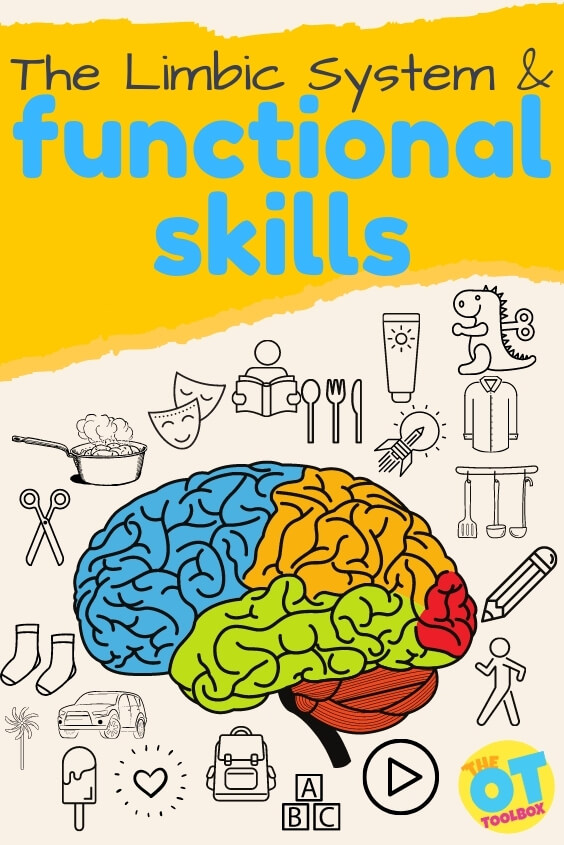 Resources and tools for understanding the limbic system and functional tasks.